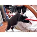 The Kitten Circus