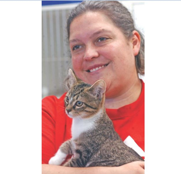 Stolen Kitten is Recovered and Returned to Shelter