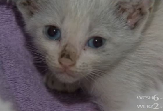 Kitten Trapped in Car Finds Home with Rescuer