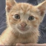 Kitten Rescued from Car Engine After 35 Mile Ride
