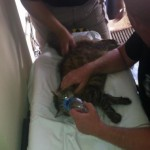 Firefighters Rescue Cat from Burning House Following Explosion