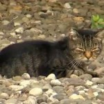 South Newton Twp Tosses Out Plan to Trap and Kill Cats