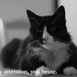 """Henri 7 – """"The Cat is Sat"""""""