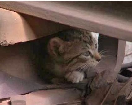 Kittens That Disrupted Brooklyn NY Subway Service are Safely Removed from Tracks