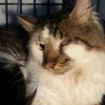 Rescue Helps Cat Abandoned in Foreclosed Home for 2 Months