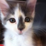 Teen Girls Charged, Kitten Safe After Microwave Vine Video is Reported to Police