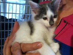 PORT-recovering-kitten-IMG