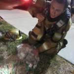 Unconscious Cat is Revived by Firefighters with Pet Oxygen Mask