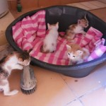 Kittens Rescued from Intersection