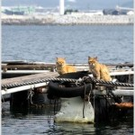 Chii and Dorami: Cats Living on the Fish Farm