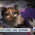 Help for Hope: A Burned Kitten's Recovery