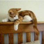Oscar Kitten Chases His Tail