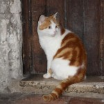 Laptop: Canterbury Cathedral Cat Remembered