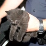 Police Rescue Kitten Trapped in Car Engine