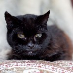 Cola Nears 28th Birthday: May Be Oldest Living Cat