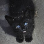 Puddles the Kitten is Rescued from Storm Drain