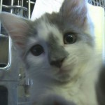 Miracle Update: Maine Microwave Kitten Doing Well and Getting Worldwide Support