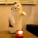 Cat Plays the Theremin