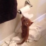 Marmalade and the TP