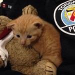 Toronto Police Officer Adopts Kitten Rescued from Garbage