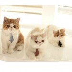 Three Kittens Looking for Jobs