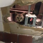 Cat Rescued from Wall at Reagan National Airport