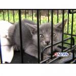 Corpus Christi Couple Saves Kitten from Storm Drain