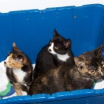 Mama Cat and Kittens Dumped in Sealed Bin are Rescued
