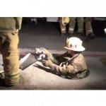 Los Angeles Fire Department Kitten Rescue: Footage from Scene