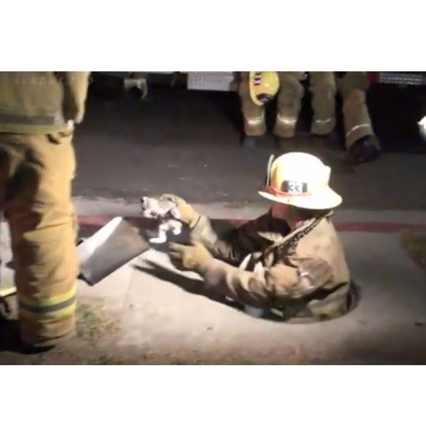 Los Angeles Fire Department Kitten Rescue: Footage from Scene
