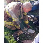 Kitten is Rescued and Revived After Fire