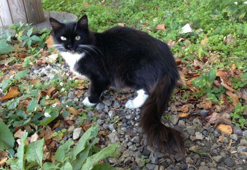 Fluffy's Story: A Stray's Rescue