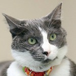 """Cat Nearly Dies, Makes Amazing Recovery & Becomes Kitty """"Ambassador"""""""