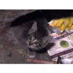 Police and Firefighters Aid Kitten in Distress