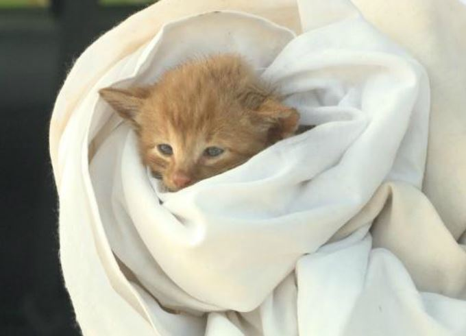 Good Samaritans Rescue 4 Kittens, Get Animal Control to Rescue 5th Kitten from Storm Drain