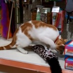 Cat Makes Daily Visits to Pet Store