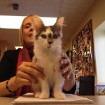 Miracle, Kitten from Microwave Video, Has a Home
