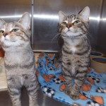 Petition Wants Shelter to Allow Facebook Page to Network Animals