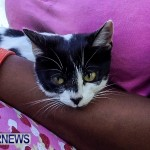Photos: Cat Rescued From Bermuda House Fire
