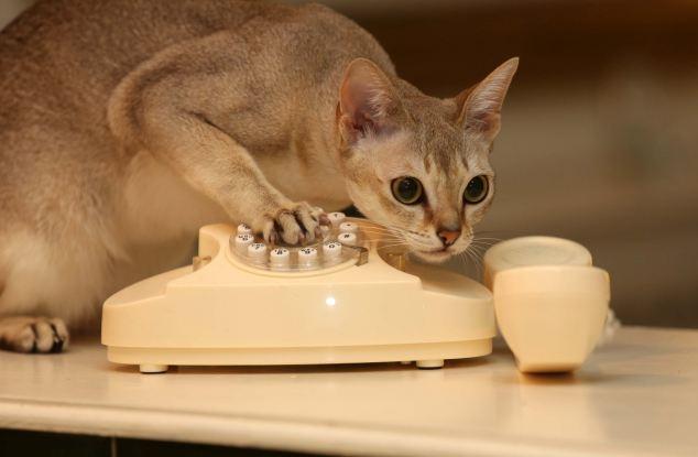 Crazy Cat Call Video