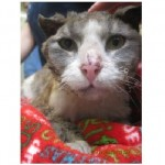 PSPCA Needs Help Identifying Suspects in Cat Set on Fire, $2000 Reward Offered
