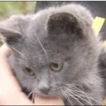 Paramedic Revives Boy's 9 Week Old Kitten at House Fire
