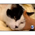 Mayor Rescues Cat Shot with Crossbow Arrow