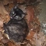 Firefighters, Police and Animal Control Rescue Trapped Kitten