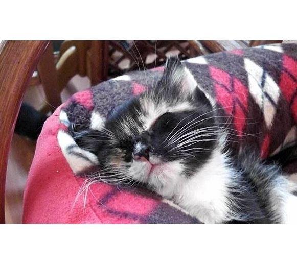 Sleepy Little Kittens, Soooo Cute!
