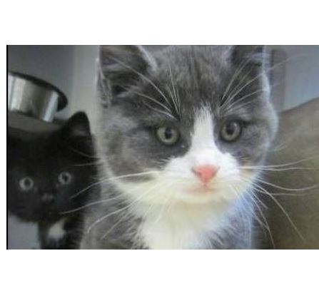 Shelter Kittens Travel to Find New Homes