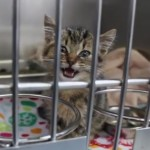 Trapped Kitten Dawson is Rescued from Inside Gas Station Wall