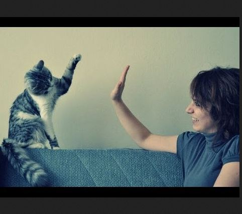 Cats Giving High Fives Compilation