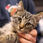 Kitten Rescued by Firefighters is Adopted by Police Officer's Family