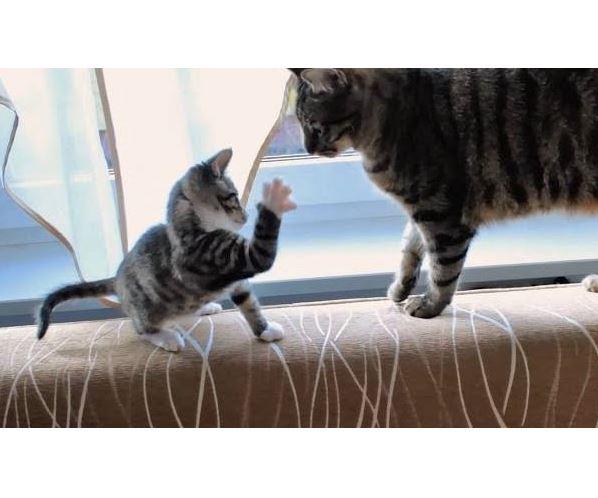 Kitten vs Evil Tail Compilation